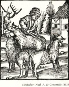 Schafsschur-Grafik